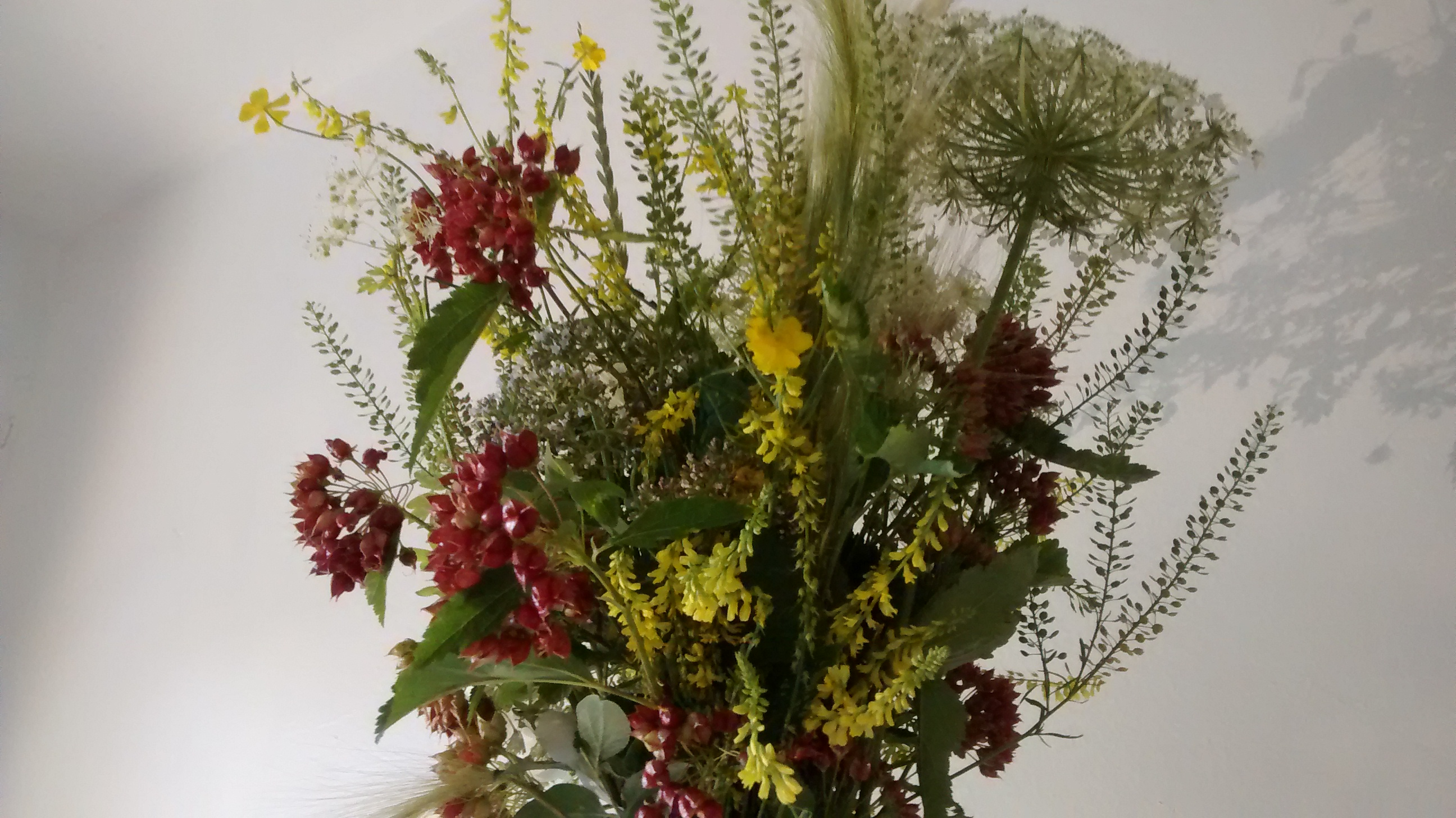 Bouquets De Fleurs Sauvages Au Centre De La Ville Pieuvre Ca
